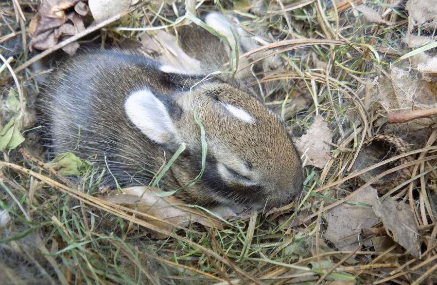 snuggle bunnies