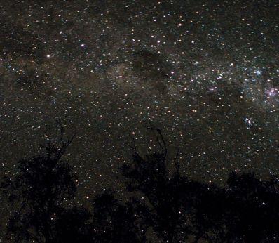 Strange-stars-stranger-trees
