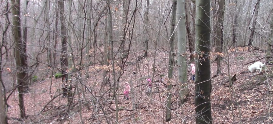 wood-elves