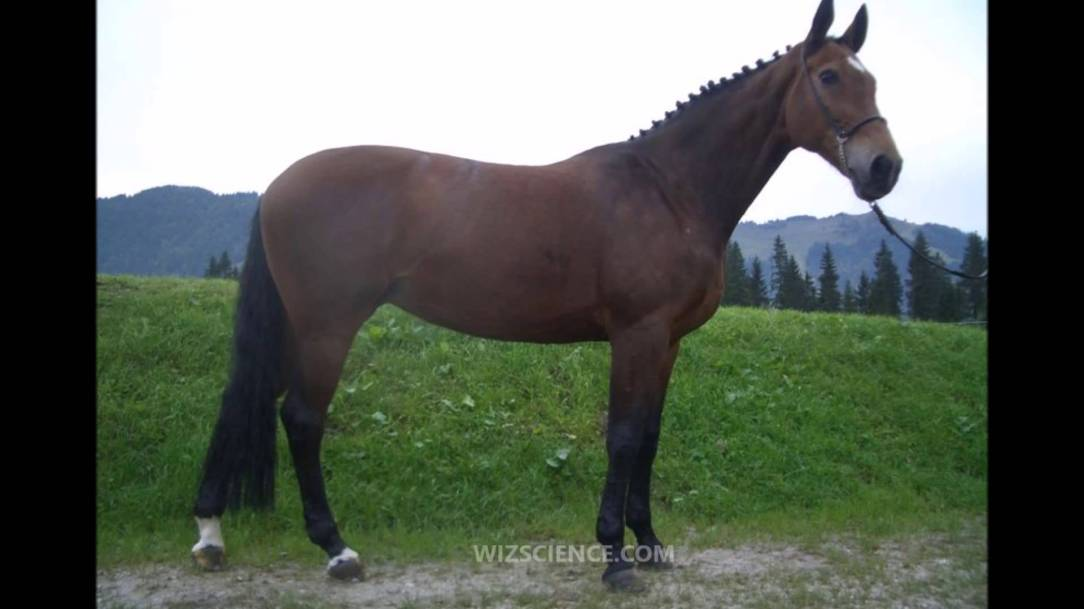 Warmbloodfeatured