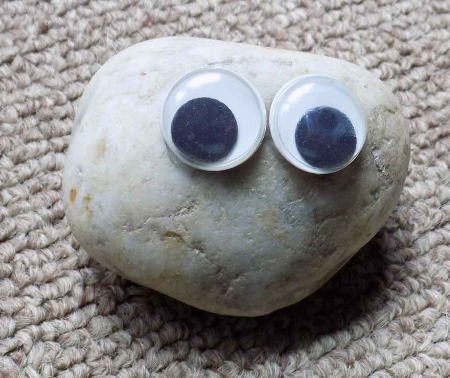 pet rock1