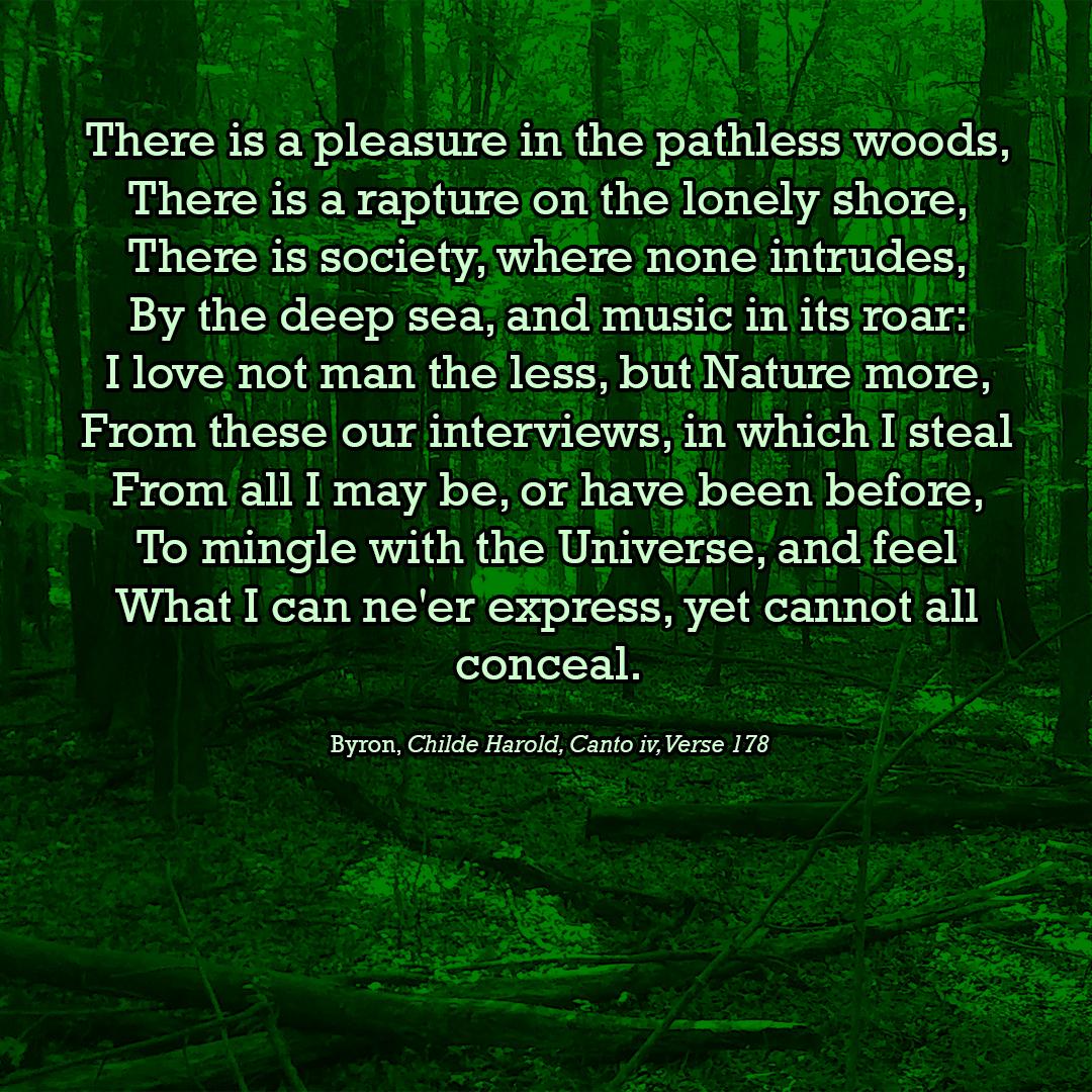 Pathless-Woods