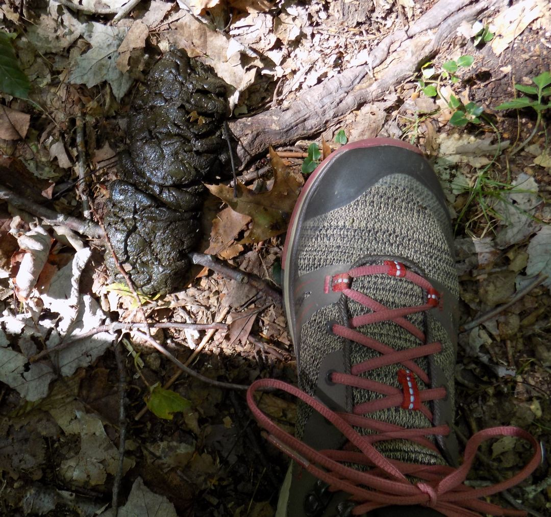bear scat and shoe