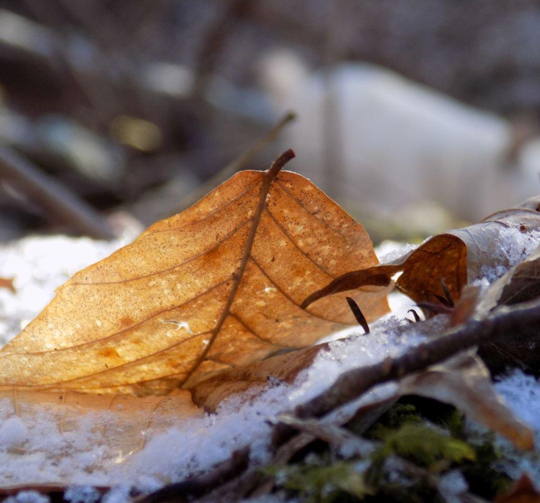 leaf and snow 4 insta.jpg