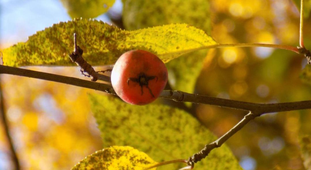 apple-insta.jpg