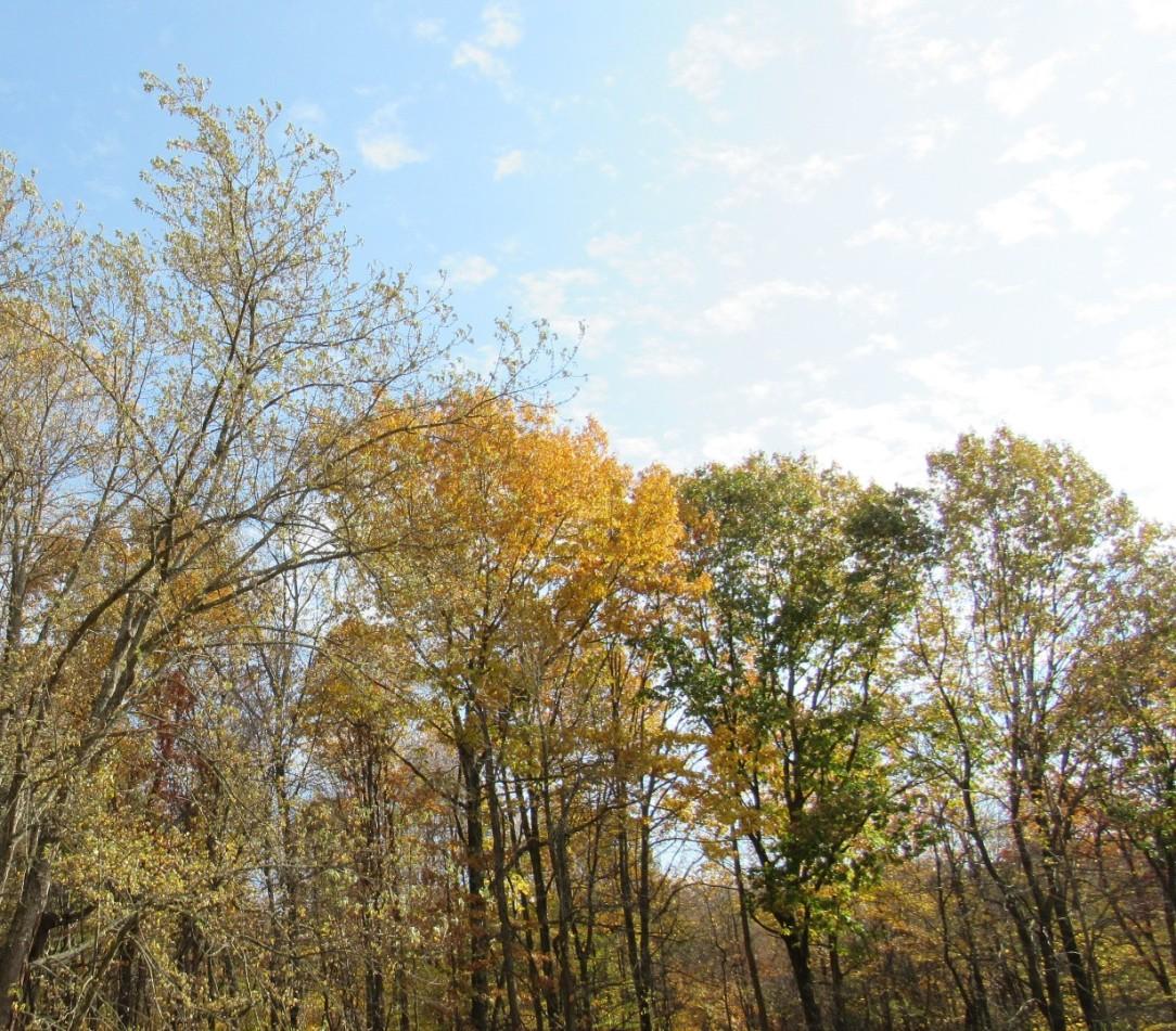 insta trees.jpg