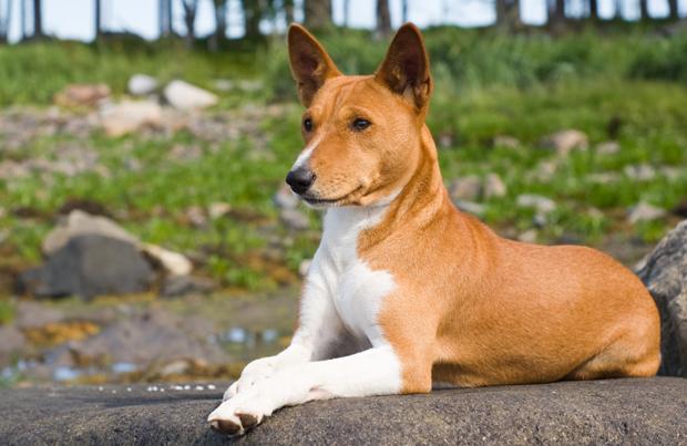 gibbydog