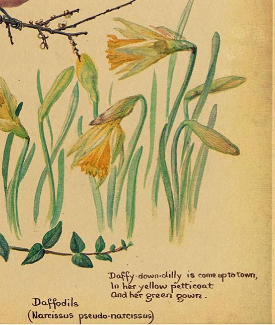 daffodils - Edited
