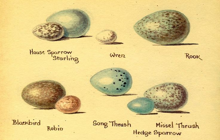march eggs